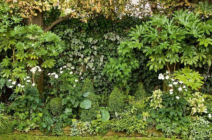Découvrez Les murs végétaux, un projet Horticulture et Jardins